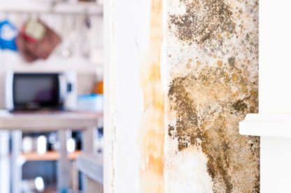 The Dangers of Mold Growth in Orlando